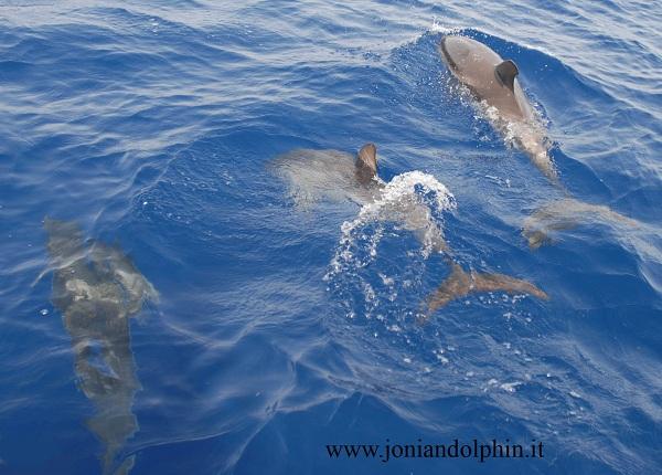 Delfini 7 LD