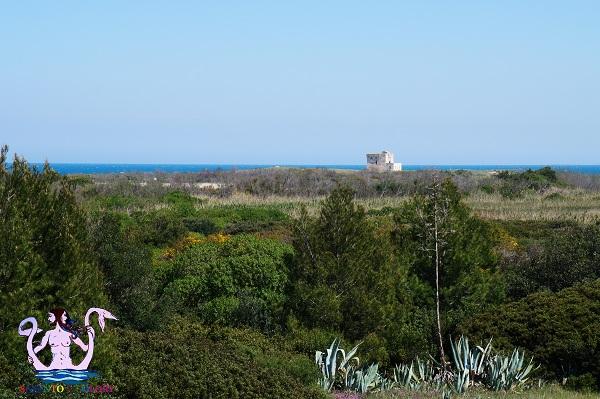 parco naturale di torre guaceto