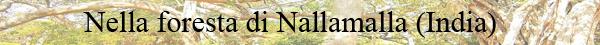 19 - nella foresta di nallamalla in india
