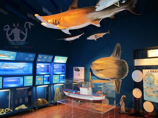 museo di biologia marina di porto cesareo 1