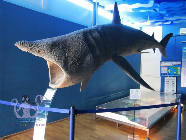 museo di biologia marina di porto cesareo 2