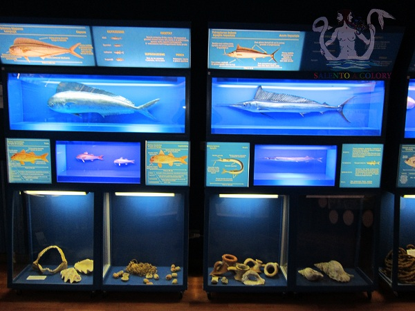 museo di biologia marina di porto cesareo 3