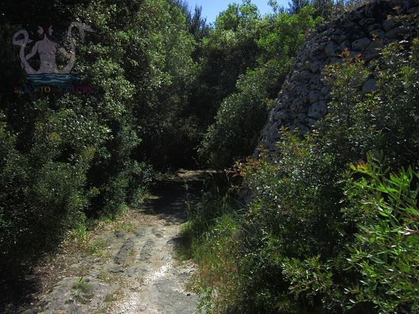 strada carraia nel rauccio