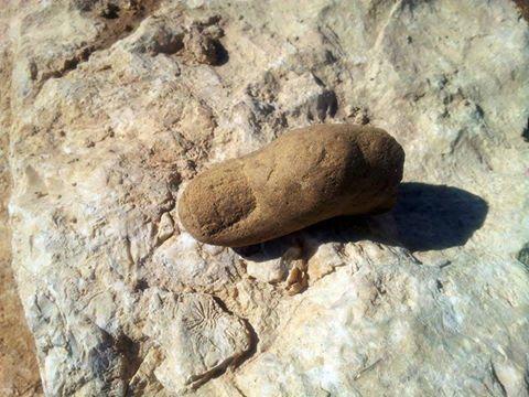 scavi castro località capanne