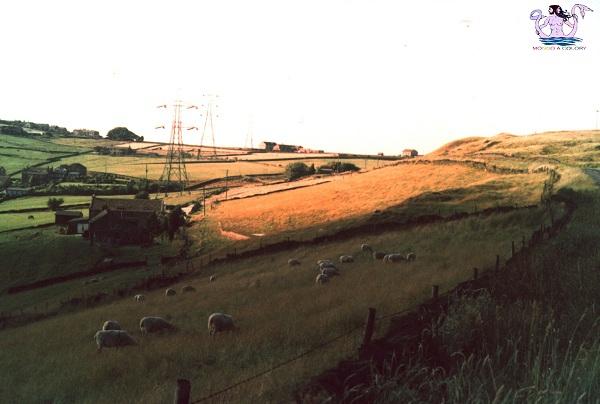 campagne dello yorkshire