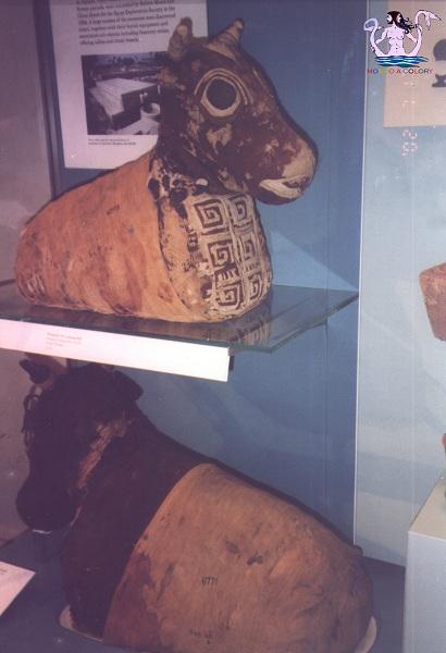museo egizio3