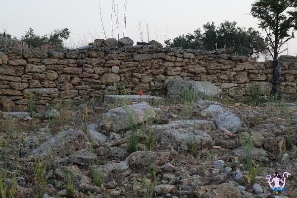 muro tenente