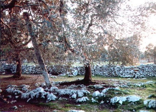 menhir santu lasi-cannole