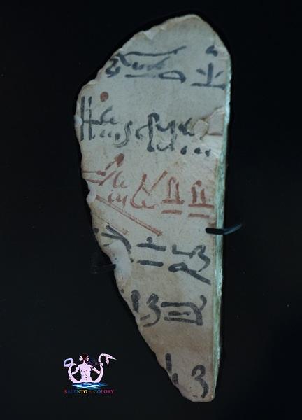 museo papirologico 16
