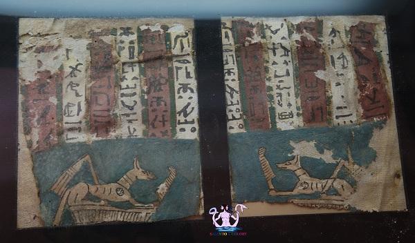 museo papirologico 20