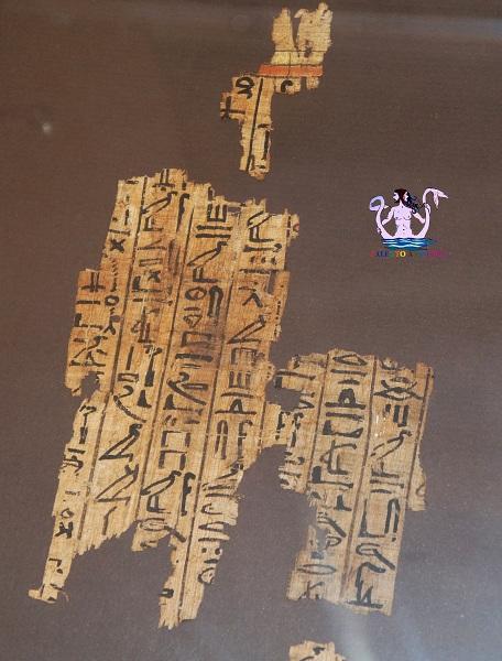 museo papirologico 24