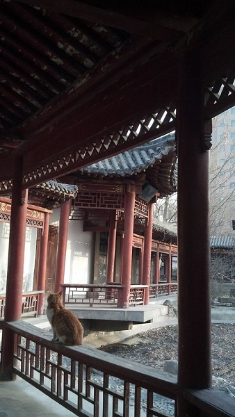 Cina, presso Shanxi