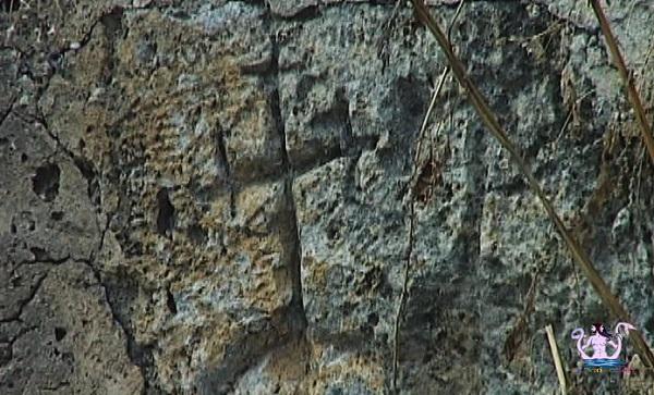 lama cornula 3