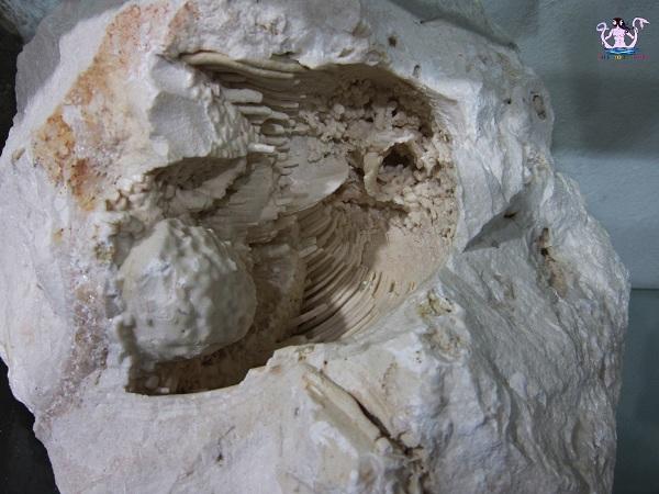 fossili 10