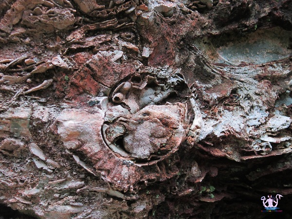 fossili 8