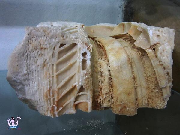 fossili 9