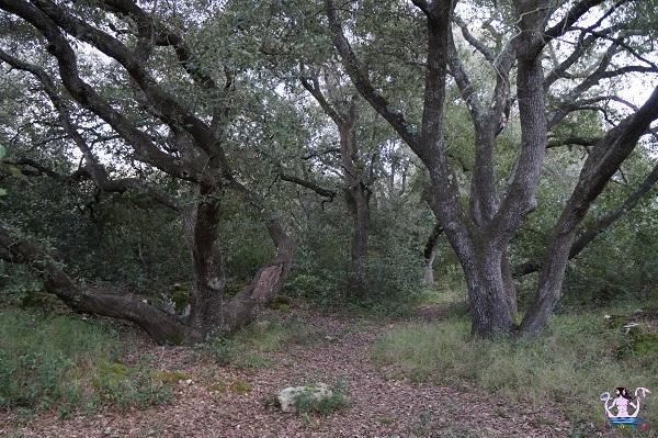 bosco li veli cellino san marco 1