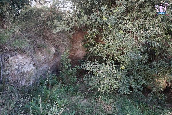 bosco li veli cellino san marco 11