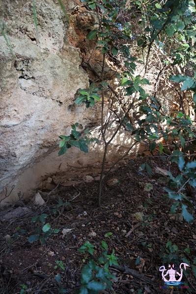 bosco li veli cellino san marco 13