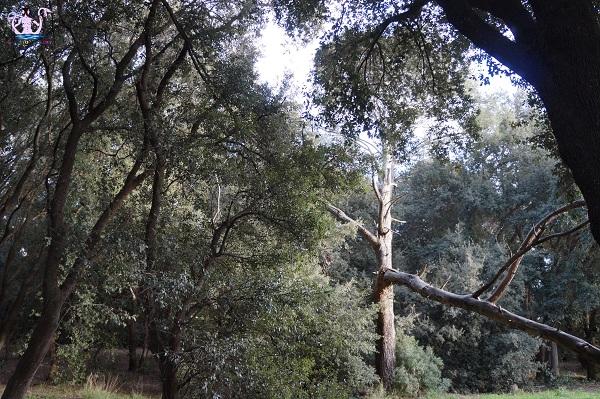 bosco li veli cellino san marco 14