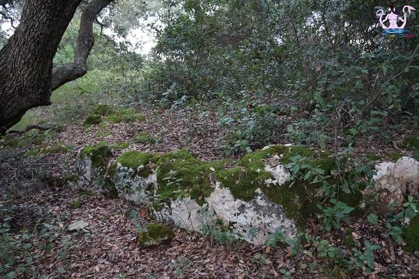 bosco li veli cellino san marco 16