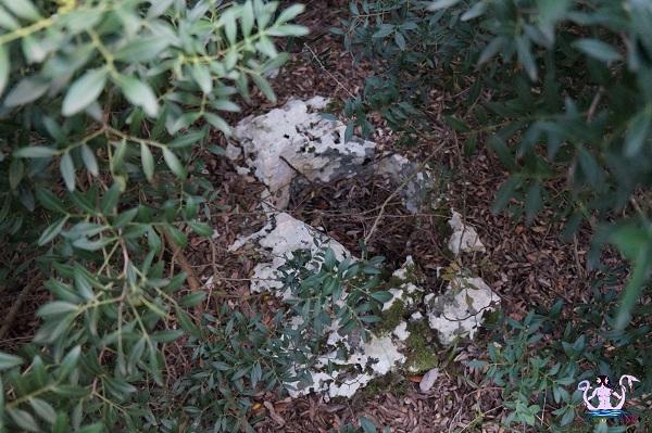 bosco li veli cellino san marco 17