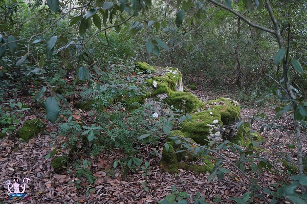 bosco li veli cellino san marco 18