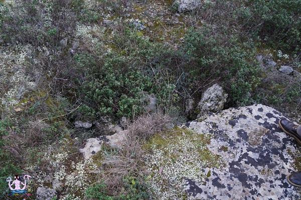 bosco li veli cellino san marco 3
