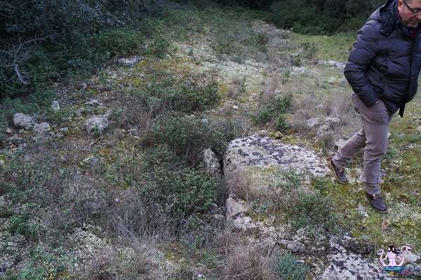 bosco li veli cellino san marco 4