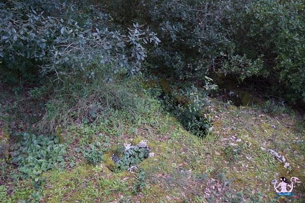 bosco li veli cellino san marco 8