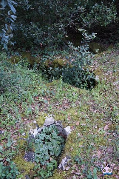 bosco li veli cellino san marco 9