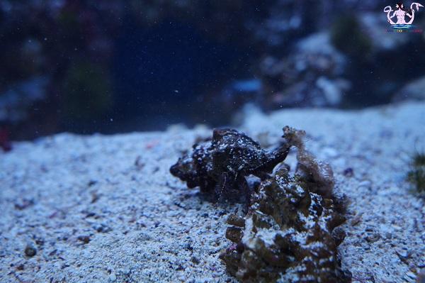 acquario del salento 14