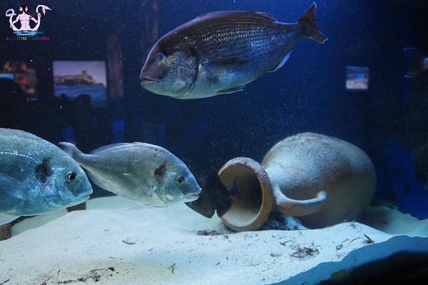 acquario del salento 19