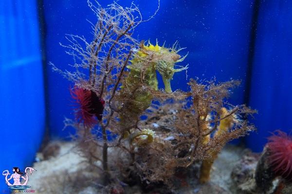 acquario del salento 25