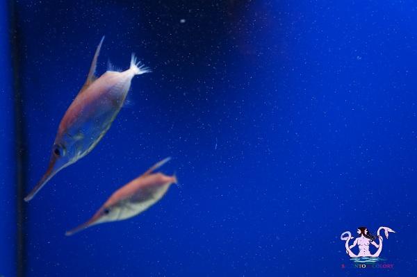 acquario del salento 26