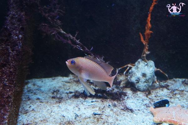 acquario del salento 28