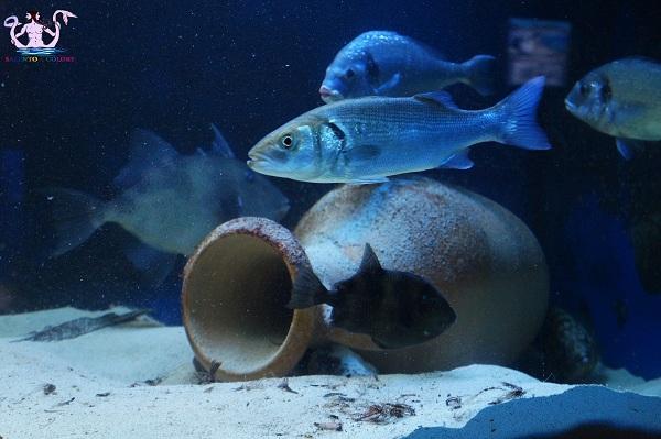 acquario del salento 30
