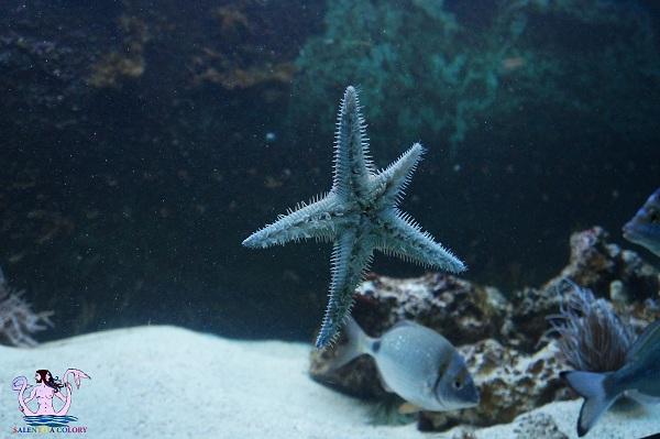 acquario del salento 31