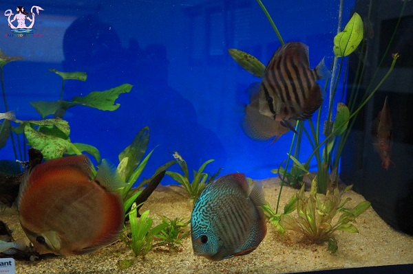 acquario del salento 5