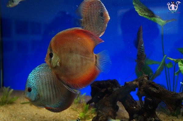 acquario del salento 7