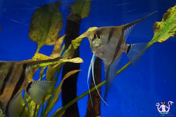 acquario del salento 9