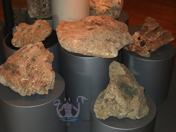 museo dell'ambiente 2