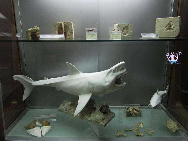 museo dell'ambiente 24