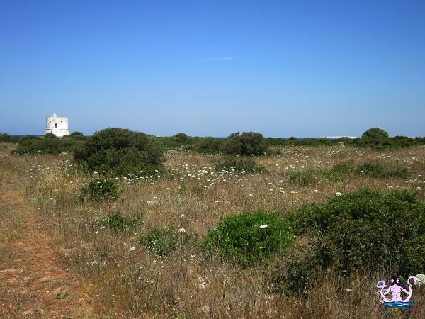 Parco naturale regionale Isola di Sant'Andrea e litorale di Punta Pizzo 10