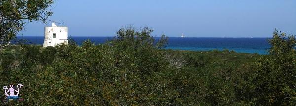 Parco naturale regionale Isola di Sant'Andrea e litorale di Punta Pizzo 12