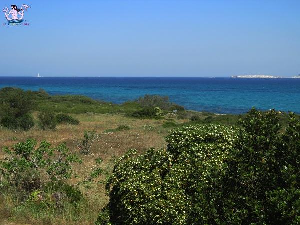 Parco naturale regionale Isola di Sant'Andrea e litorale di Punta Pizzo 4