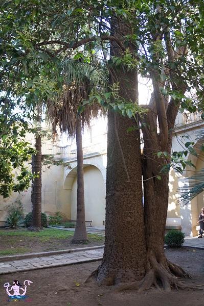 cortili aperti palazzo apostolico orsini 2