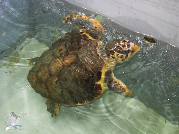 parco rauccio tartarughe