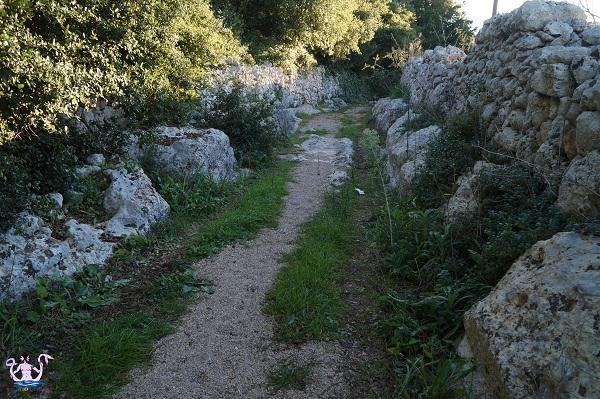Lungo la Via dell'Olio Maglie-Gallipoli