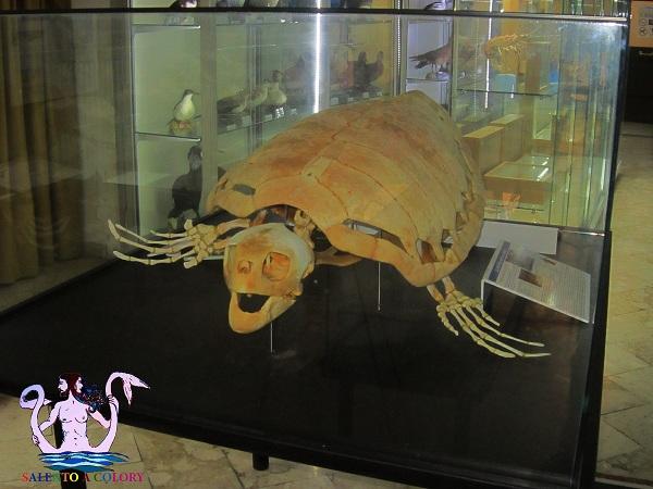 Il Museo del Mare di Gallipoli